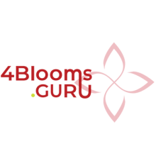 4Blooms.Guru Cannabis Marketing