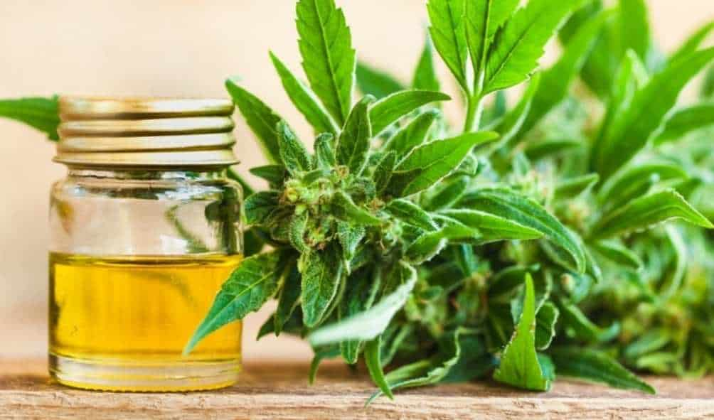 CBD Extraction Guide What You Need to Know About Producing CBD Cannabis Products