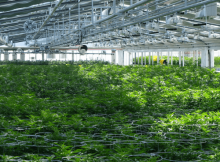 CMRE – Commercial Marijuana Real Estate