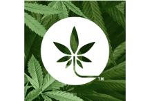 Brandsy Cannabis Creative