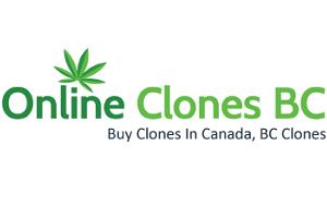 Online Clones BC