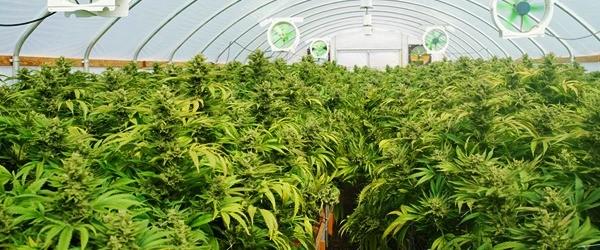 marijuana growing supplies