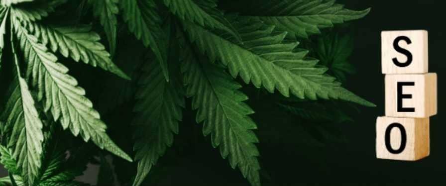 SEO for cannabis business