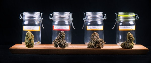 Top Marijuana Mutual Funds for 2020 – And Tips on Picking One