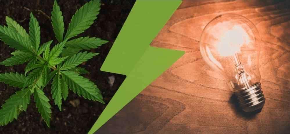 cannabis-business ideas cannabis stack