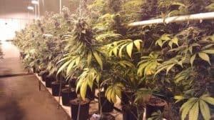 DenverMarijuana Tours
