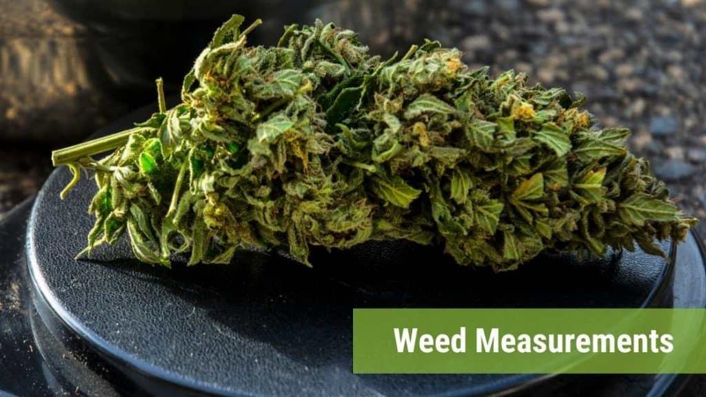 weed-measurements